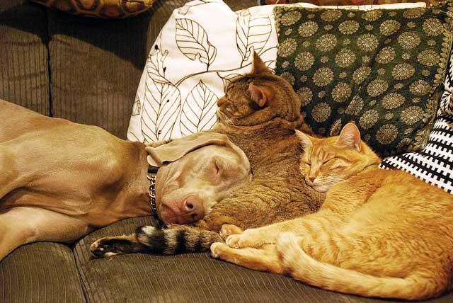 Yoshi, Izzy and Mango